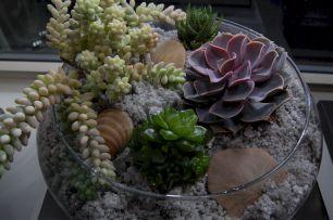 DIY Succulent Terrarium Ideas 10