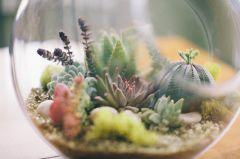 DIY Succulent Terrarium Ideas 6