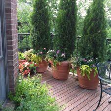 Summer Planter Ideas 19