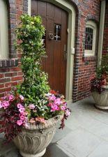 Summer Planter Ideas 22