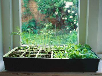 Indoor Herb Garden 18