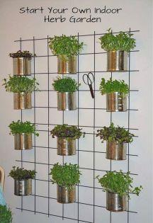Indoor Herb Garden 3