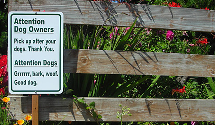 Dog Message Sign Presentation Zen