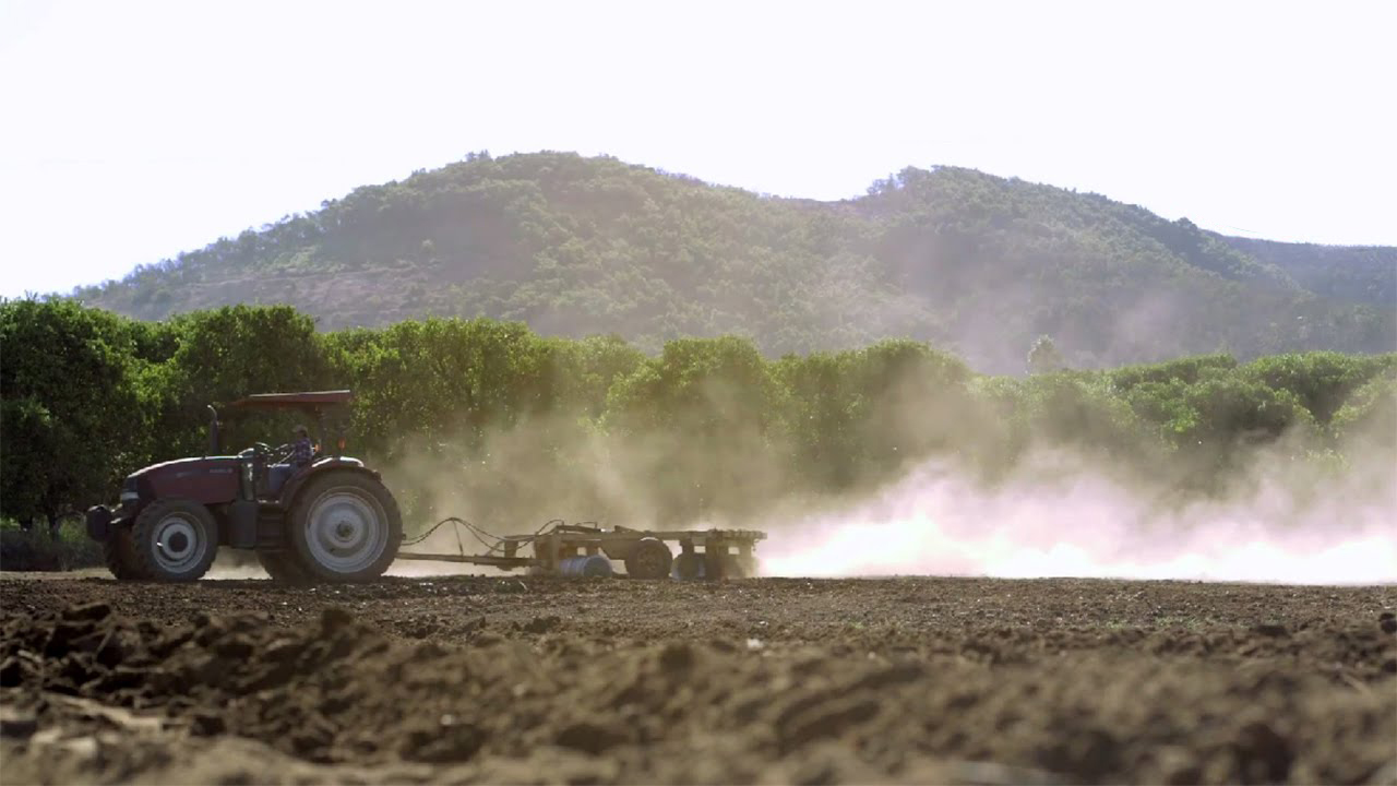 Stehly Farms Organics in San Diego County is using half as much water to yield twice as much fruit using a high-density planting technique developed by the University of California. (Credit: Whole Foods)