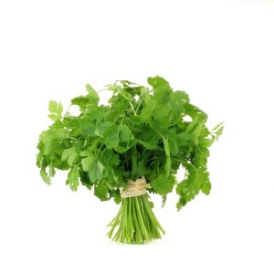 coriander-fresh-produce-group-llc-4.jpg