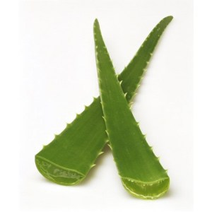 ALOE-VERA-FRESH-PRODUCE-GROUP-LLC5.jpg