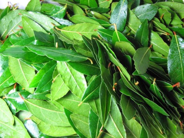 BAY LEAVES FRESH PRODUCE GROUP LLC3 - BAY LEAVES FRESH (click image to view)