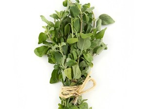 OREGANO-FRESH-PRODUCE-GROUP-LLC7.jpg