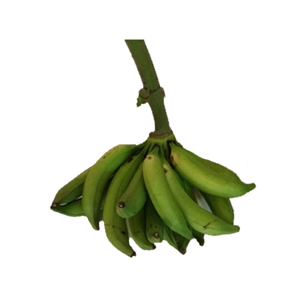 PLANTAIN FRESH PRODUCE GROUP LLC3 - PLANTAINS BANANAS FRESH (click image to view)