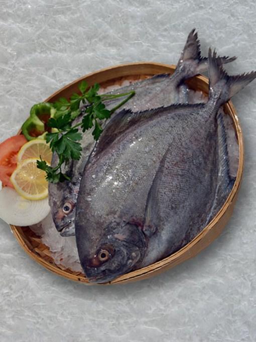 river halwa fish online