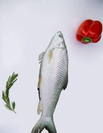 buy online Mirgil fish (मिरगील मासा