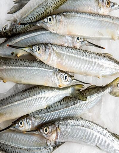 Tol Fish (टोळ)   Buy fresh fish online
