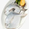 paplet fish in shurawar peth
