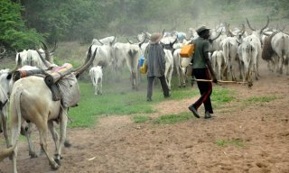 Suspected Herdsmen Kill University Lecturer In Enugu
