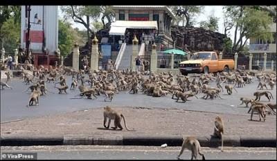 CORONAVIRUS: Monkeys Invade Thai City In Search Of Food