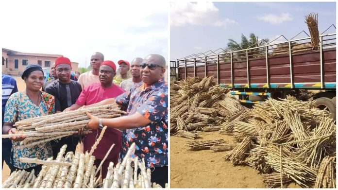 Anambra Lawmaker Distributes Cassava Stems To Constituents (Photos)