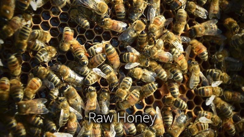 raw honey pastured alfalfa clover bees