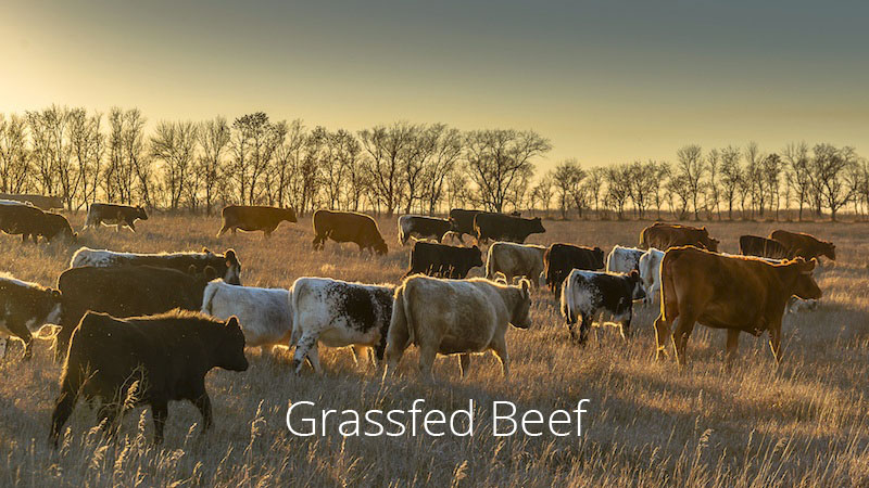 grassfed beef grass-fed beef cattle cows local free range pasture