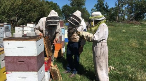 beekeeping, apprenticeship, internship, ranching, farm, work, learning, education