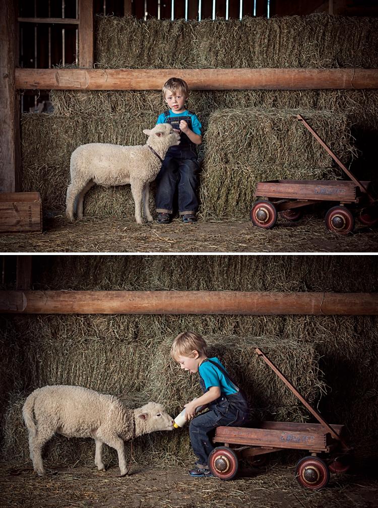 fsp_lambs_koda-201 copy.jpg