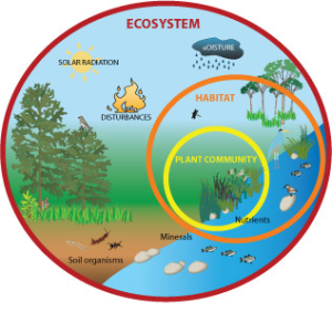 Ecosystem Services | Earthwatch FreshWater Watch
