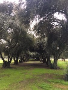 Visiting Two of Fresno's Lesser-Known Gems: Kearney Boulevard and Park