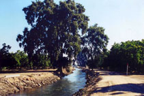Tulare Irrigation District main canal