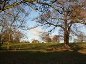 FRIARY PARK TREES DEC 2005