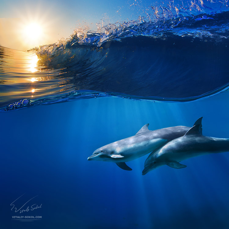 two beautiful dolphins beautiful photography fribly