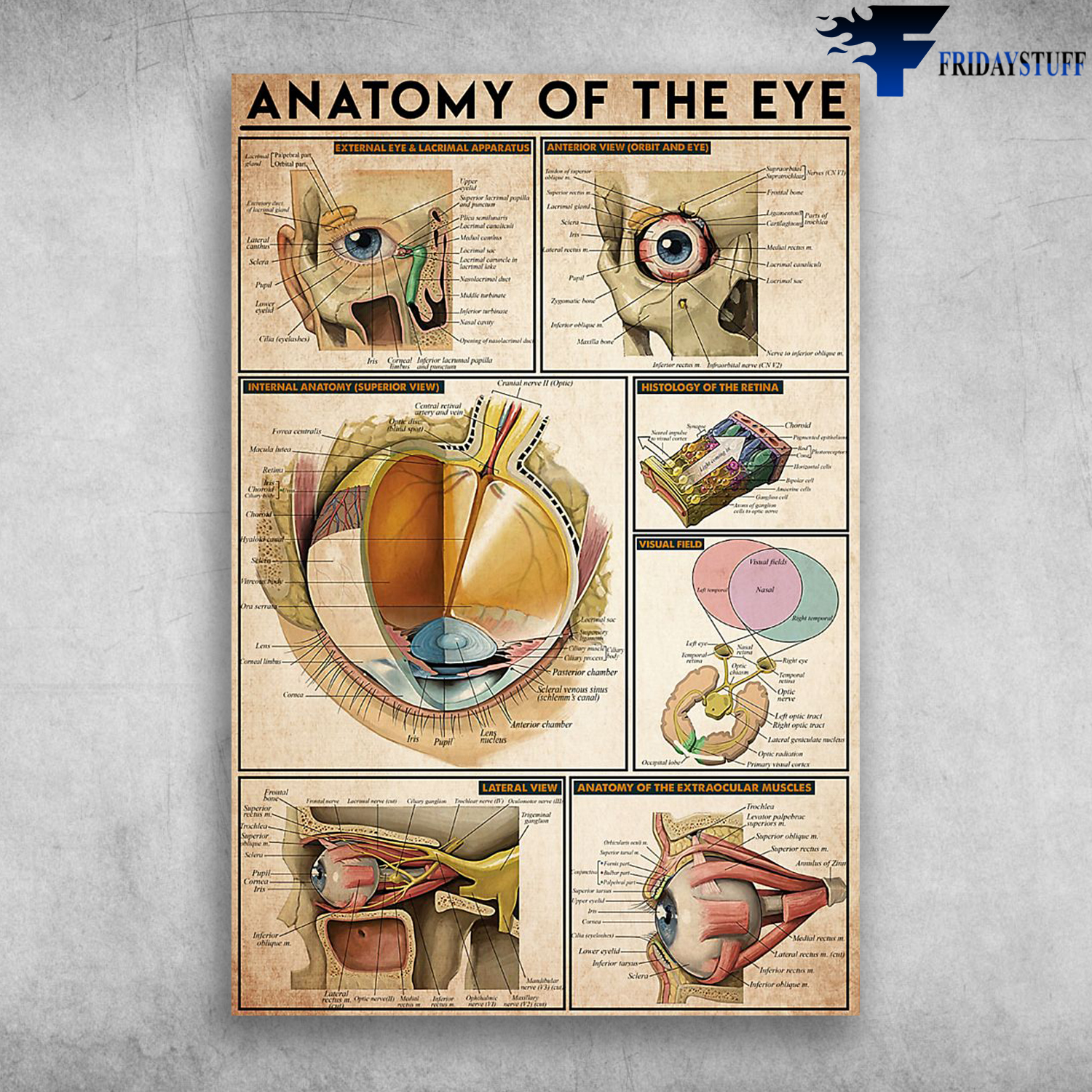 Anatomy Of The Eye Anterior View External Eye And Lacrimal