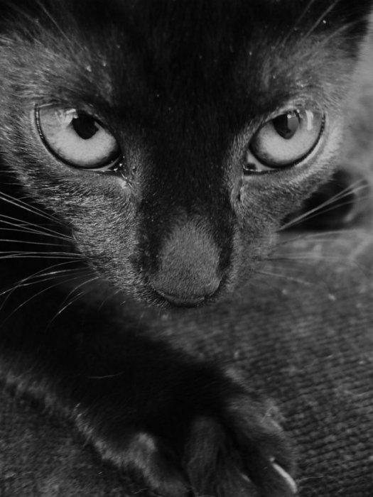 Ebil cat