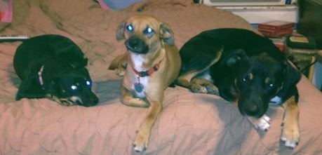From L-R Missy the mama 6, Little Bitty her daughter 3 and Fluffy her son 3 - my grandbabies