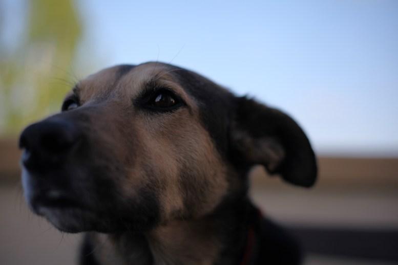 Hund Fama