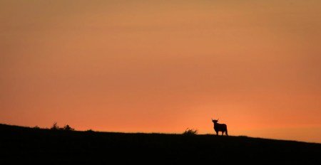 highlandcattle (1 of 1)