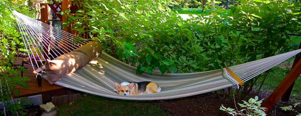 Dog_days_of_summer___Fiona_On_Hammock___By__wplynn___Flickr_-_Photo_Sharing_