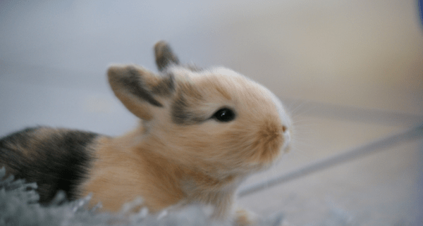 Little_Bunnies___Flickr_-_Photo_Sharing_