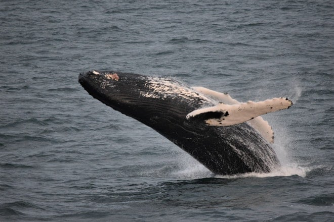Whale watching friends in iceland