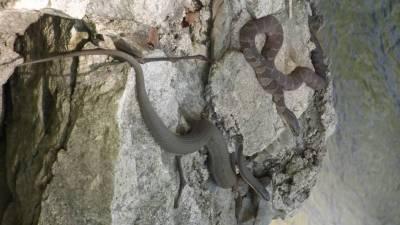 2 sunning snakes