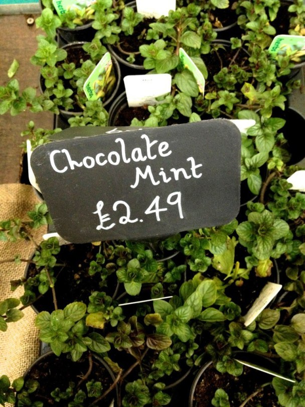 Chocolate Mint plant http://www.urban-herbs.co.uk/