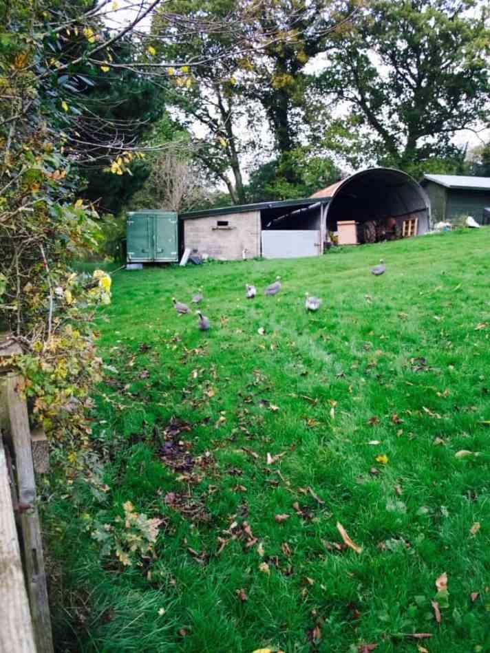 Devon in Autumn