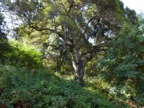 Oak forest on north side, July 2014, photo by Pierre La Plant