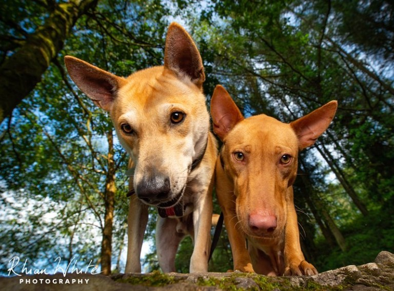 REHOMED Lady & Darling – 2-year old Malaysian crossbreeds