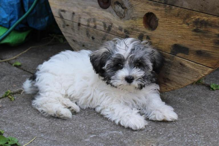 ADOPTED – DARCY