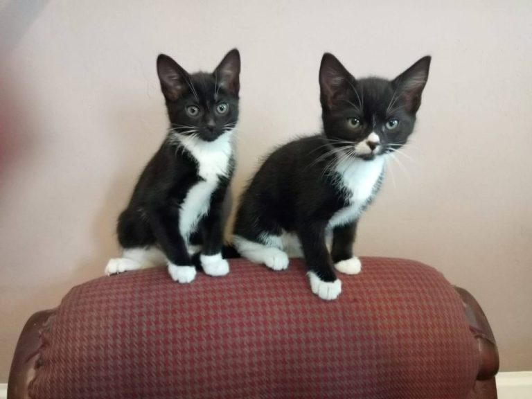 Waffle & Wafer  ***ADOPTED****