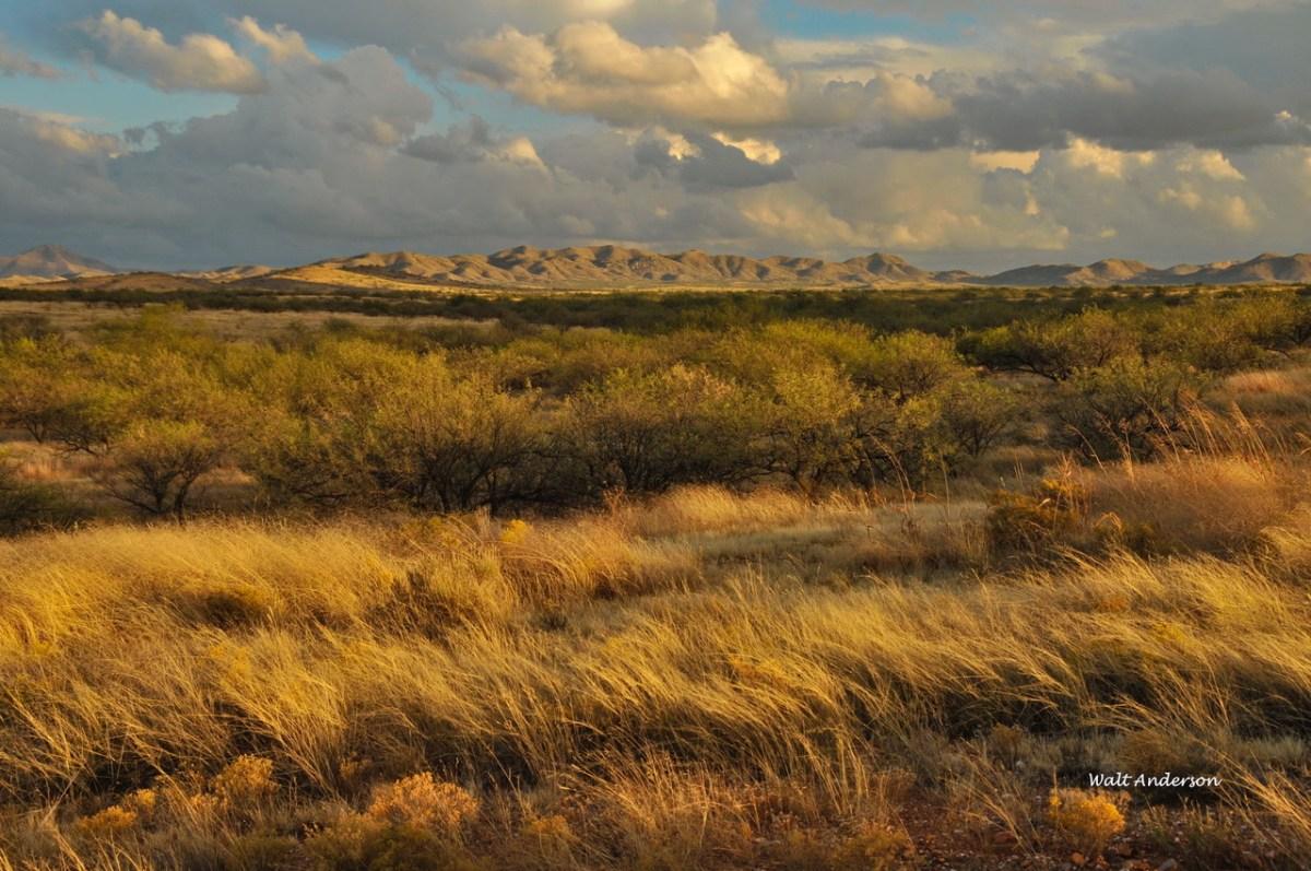 Desert Grasslands, Buenos Aires NWR