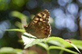brown butterfly on leaf
