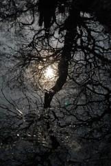 reflection of tree in Belair lake