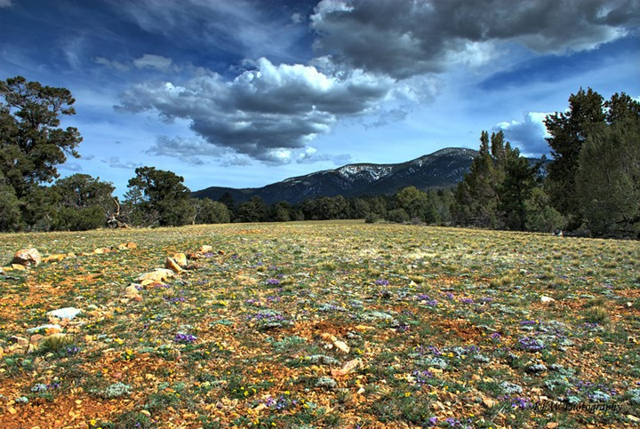 Pebble Plains with flowers and clouds