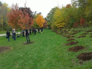 cedarvale-ava-plantings-volunteers