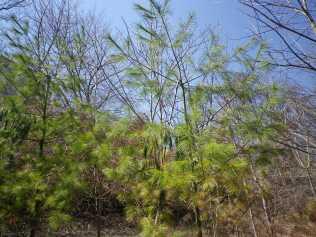 cedarvale-broken-trees-april-25-2014-301